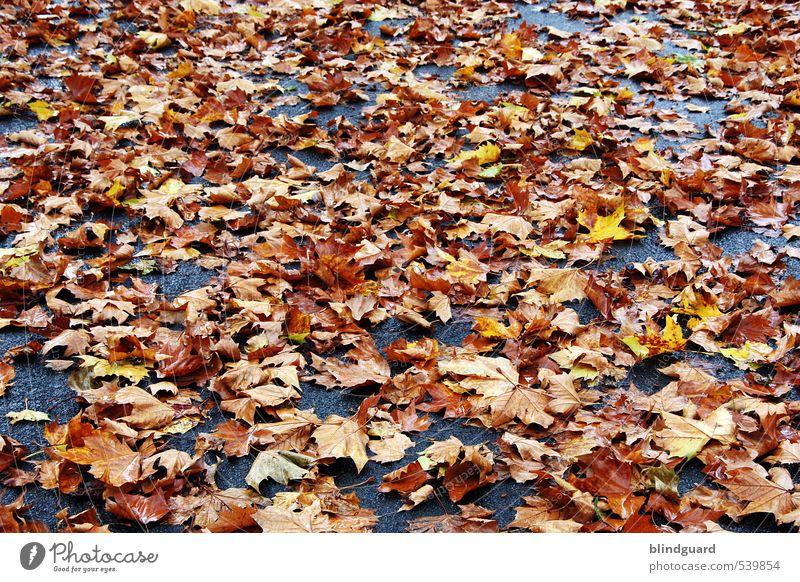 Ur-Laub Umwelt Natur Herbst Klima Baum Blatt Straße verblüht dehydrieren dreckig nass braun mehrfarbig gelb grau rot schwarz Sicherheit Vergänglichkeit Farbfoto