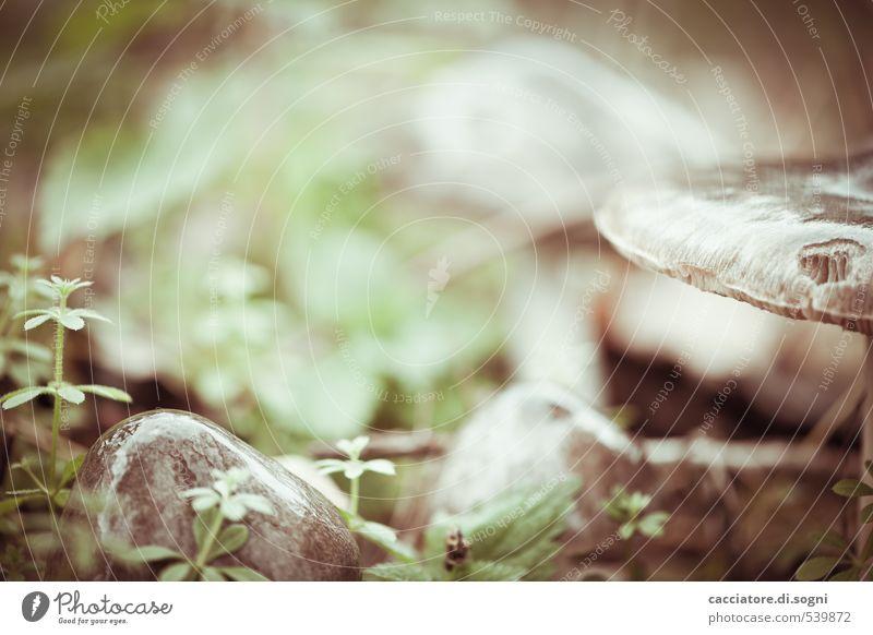 In einem Wald in Deiner Nähe Natur grün Pflanze ruhig kalt Herbst klein außergewöhnlich braun glänzend Idylle Schönes Wetter frisch nass einfach Vergänglichkeit