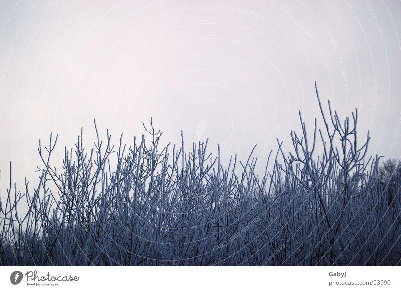 gefrostet Winter Licht Eiskristall kalt Sträucher Geäst Himmel Schnellzug Natur Raureif Frost Ast Pflanze light sky cold warten waiting