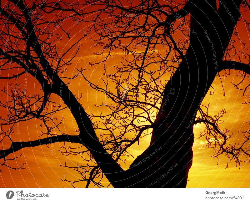 timeless Baum Winter Physik Färbung erhaben Röte Sonnenuntergang gelb Amber rot schwarz dunkel Farbverlauf Verlauf Silhouette Außenaufnahme tree Wärme sun alt