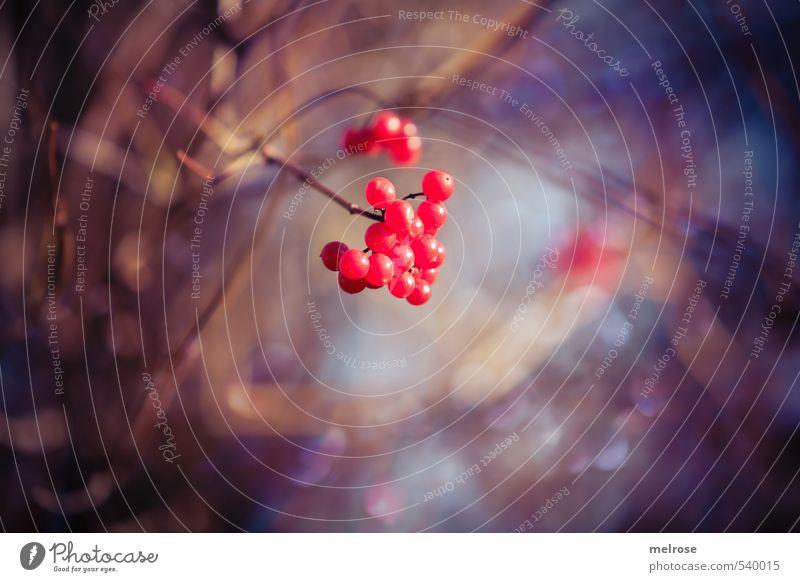 Farbtupfer Natur blau Stadt Pflanze rot Erholung Wald Herbst braun gold glänzend leuchten Sträucher violett entdecken positiv