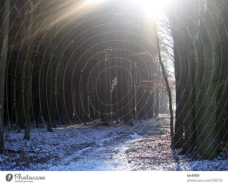 Winterwald Sonne Blatt Wald Schnee Wege & Pfade trist Fußweg