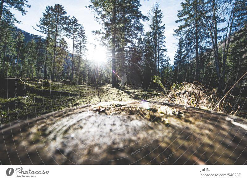 Im Wald Natur Landschaft Luft Sonne Herbst Schönes Wetter Pflanze Baum Blatt Stimmung Wahrheit Farbfoto Außenaufnahme Dämmerung Licht Sonnenlicht