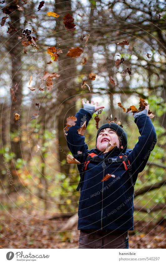 blätterrausch Mensch Kind Junge Kindheit 1 3-8 Jahre Natur Herbst Blatt Wald Jacke Mütze Bewegung Spielen werfen frech Fröhlichkeit Glück blau braun gelb grün