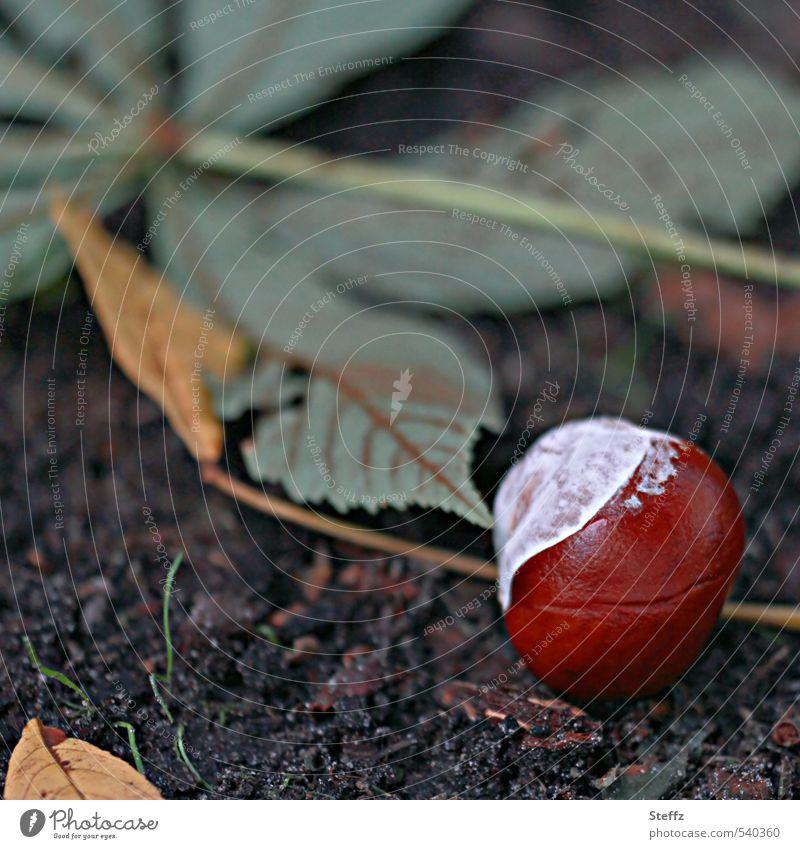 Kastanie Umwelt Natur Pflanze Herbst Blatt Kastanienblatt Herbstlaub Park nah natürlich schön braun grün Stimmung Traurigkeit Saisonende herbstlich