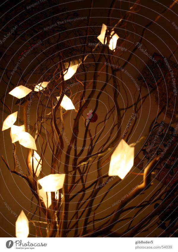 Lux Licht Nacht dunkel Pflanze Verlauf Trauer hell Weide lux Freude befreien Freiheit