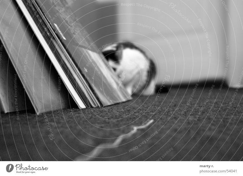 1,2,3,4 Eckstein . . . Katze beobachten fangen verstecken Nähgarn