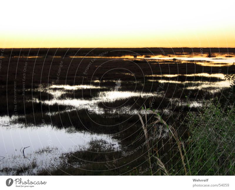 Sunset Everglades Wasser Gras USA Teich Florida Sumpf