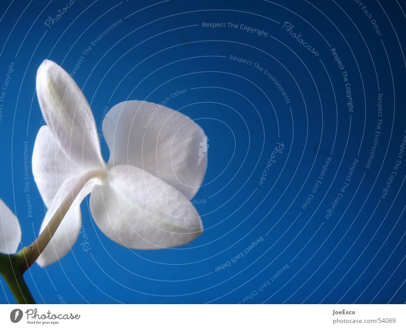 fresh orchid 03 Natur schön blau Pflanze Sommer Blume springen Stil Blüte Frühling frisch Coolness exotisch Orchidee Verlauf Blumenhändler