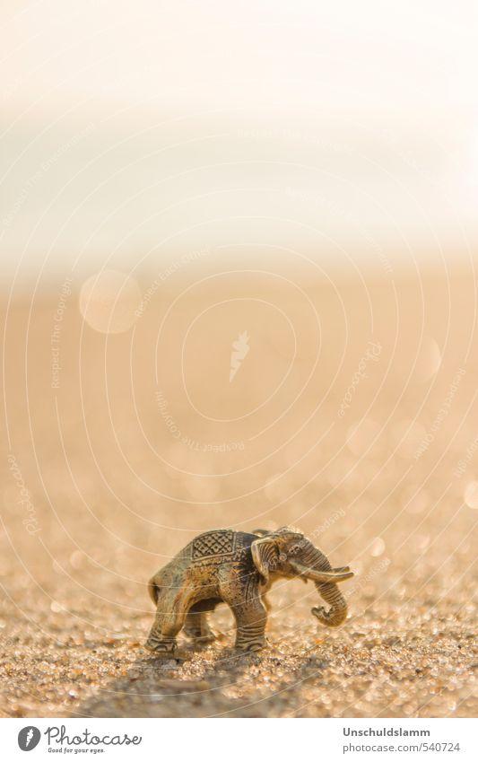 Elefant am Strand Natur Sommer Sonne Tier Religion & Glaube Glück Stil Sand hell gold Schönes Wetter Dekoration & Verzierung Gold ästhetisch einzigartig