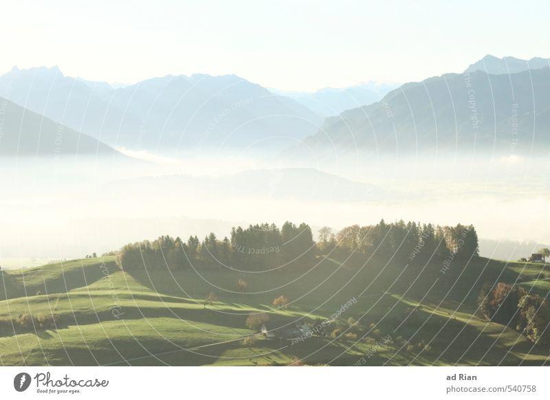 Dust it off Natur Landschaft Urelemente Himmel Wolkenloser Himmel Sonne Herbst Schönes Wetter Nebel Pflanze Baum Gras Grünpflanze Nutzpflanze Wiese Feld Wald