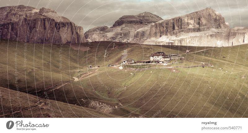 Auf der Alm Natur Ferien & Urlaub & Reisen schön Pflanze Erholung Landschaft ruhig Tier Ferne Berge u. Gebirge Gesunde Ernährung Freiheit Gesundheit Felsen