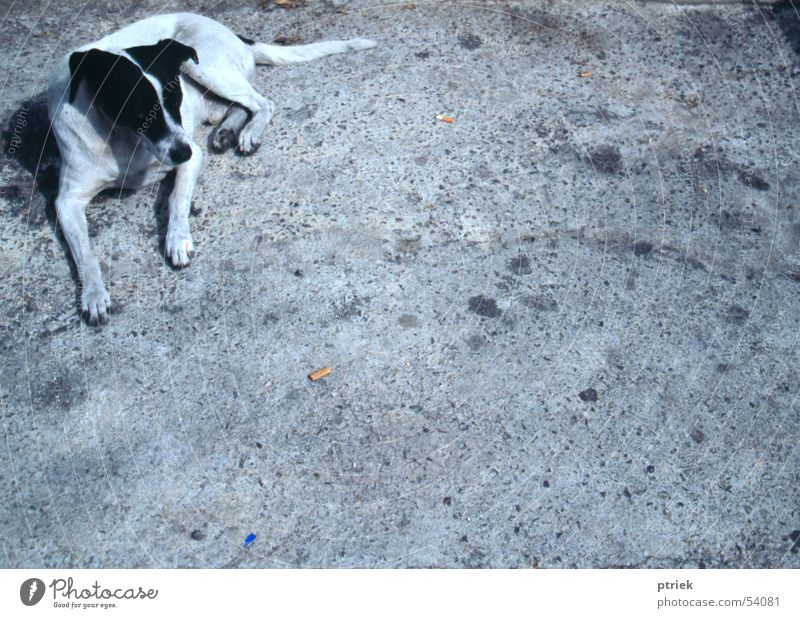 Stray dog Asphalt Lissabon