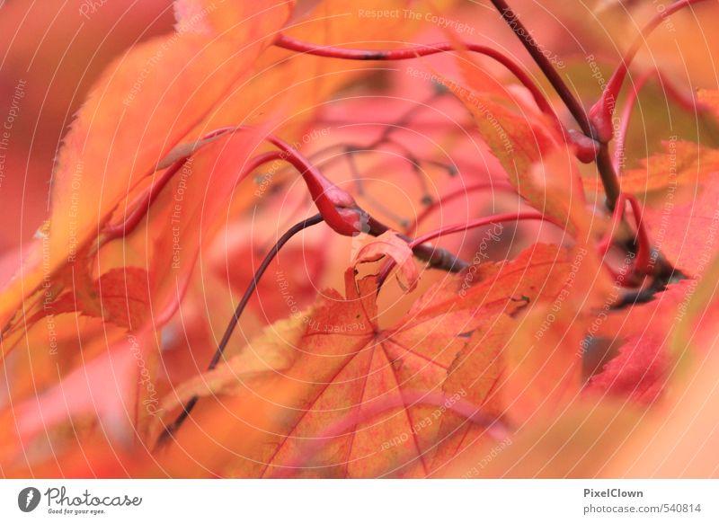 Herbstfarben Natur Ferien & Urlaub & Reisen Pflanze schön Baum Erholung rot Blatt ruhig Tier Wald Wärme Holz Park orange