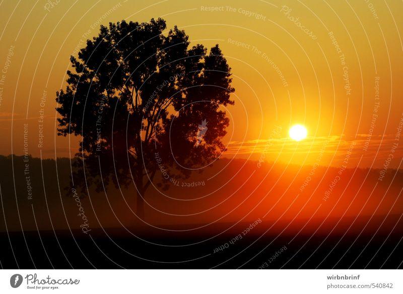 Sonnenaufgang Natur Landschaft Sonnenuntergang Sonnenlicht Sommer Schönes Wetter Nebel Baum Feld Wald Hügel Deutschland Europa Menschenleer Stimmung