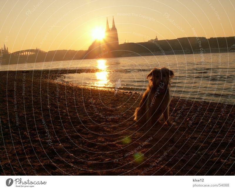 Sonnenuntergang am Rheinufer Wasser Winter Hund Küste Köln Dom