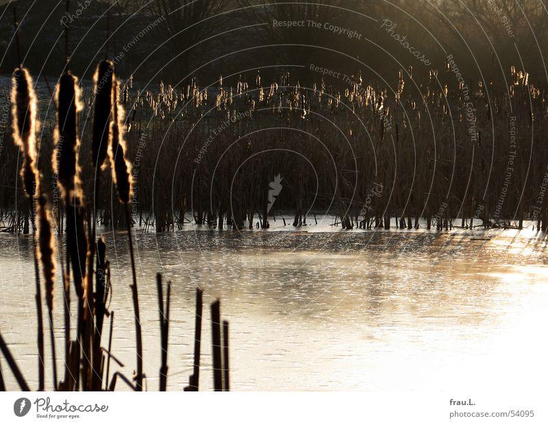 ein letzter Tag Wasser Sonne Winter ruhig Einsamkeit kalt See Eis gefroren Schilfrohr Teich Australischer Lampenputzer