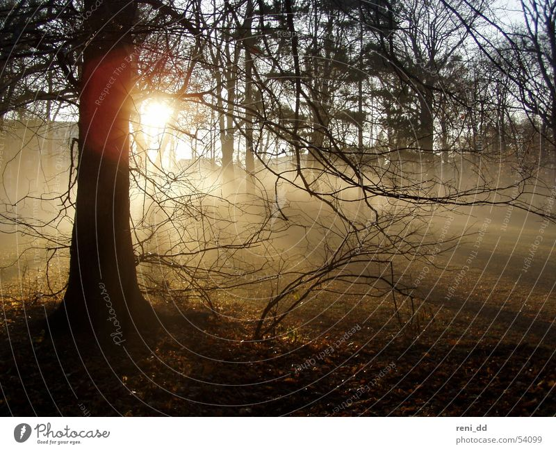 im nebel versunken Natur Baum Sonne Einsamkeit Wald dunkel Herbst Gefühle träumen Nebel Hoffnung Dresden Zweig Märchen Moor