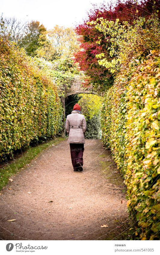 voran Mensch feminin Frau Erwachsene 1 Park gehen Hecke herbstlich Herbst Herbstfärbung Spaziergang Wege & Pfade Tor Farbfoto Außenaufnahme Textfreiraum unten
