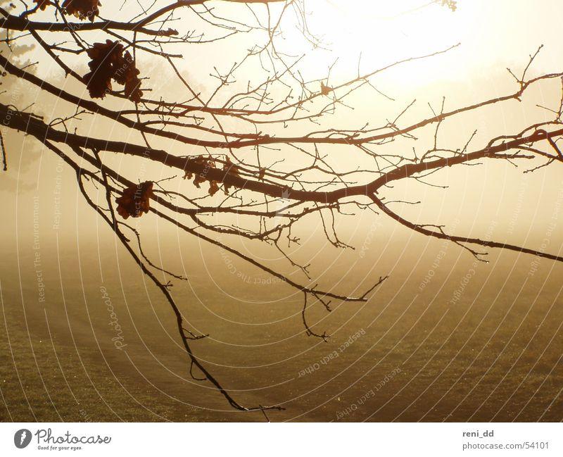 im nebel versunken1 Natur Baum Sonne Blatt Herbst träumen Nebel Hoffnung Zweig mystisch Märchen Lichtblick