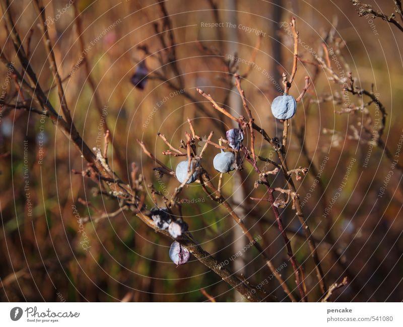trockenbeeren Natur Pflanze Herbst Sträucher Urelemente Vergänglichkeit Zeichen Verfall Moos Sumpf Wildpflanze Moor Trockenfrüchte
