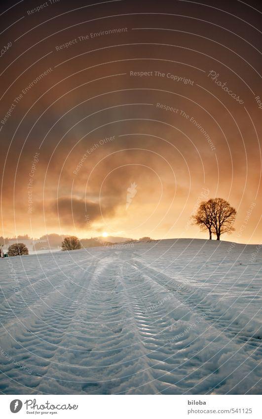 Sonnenunergang in Schwarzenburg Himmel Pflanze Baum Landschaft Wolken Winter Schnee Gefühle Horizont Stimmung Feld Spuren Schweiz