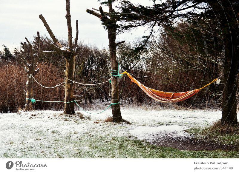 wenn jetzt sommer wär'. Natur Baum Erholung Einsamkeit Wolken Winter kalt Umwelt Wiese Spielen Garten Schneefall Park warten Sträucher Frost
