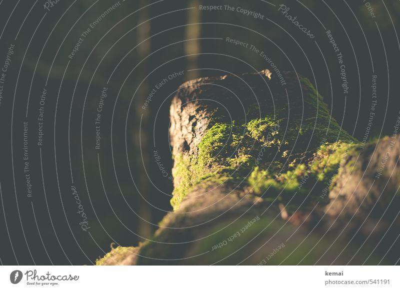 Zwei-Gipfel-Tour | Von der Sonne verwöhnt Umwelt Natur Landschaft Pflanze Herbst Schönes Wetter Wärme Baum Moos Baumstumpf Wald braun grün Farbfoto