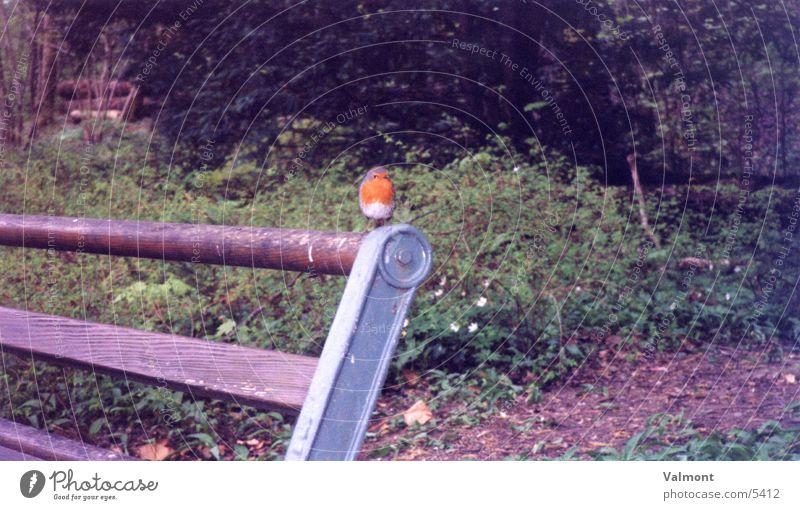 Rotkehlchen Natur Tier Wald Vogel Bank