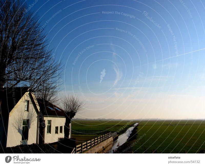 Farm House in Holland Himmel Baum Winter Haus kalt Wiese Bauernhof Weide Bach Niederlande Ebene