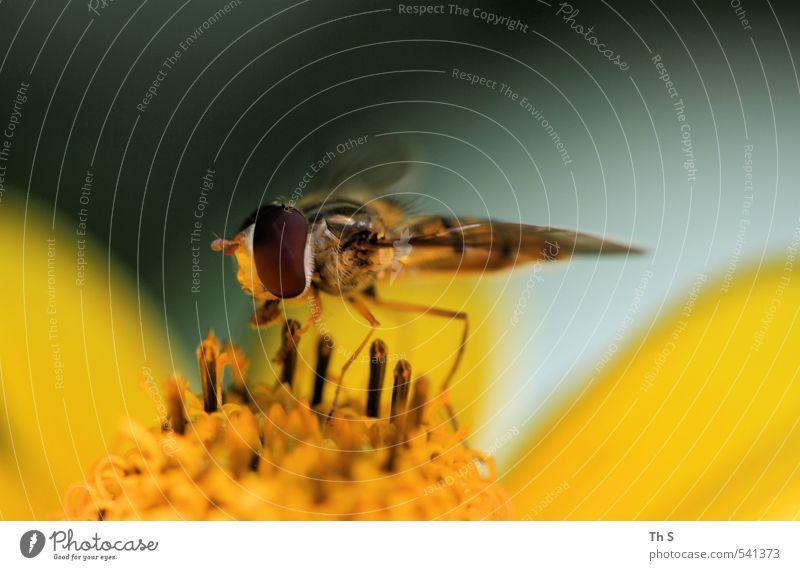 Insekt Natur Tier Blüte Wildtier 1 ästhetisch natürlich Frühlingsgefühle harmonisch Farbfoto Außenaufnahme Makroaufnahme Textfreiraum oben