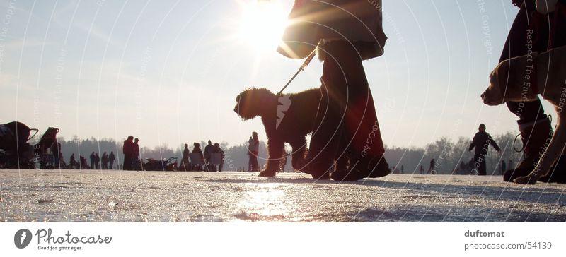 Hot Dog Hund kalt Freizeit & Hobby Winter Schlittschuhe Schnellzug Eis Schnee gassi Seil Sonne Beine kalte schnauze cold Spaziergang