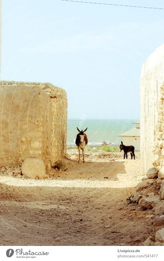 Is was? Dorf Fischerdorf Haus Hütte Mauer Wand Wege & Pfade Tier Nutztier Esel 2 Blick stehen Wärme wild weich Gelassenheit geduldig ruhig Farbfoto