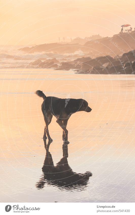 Strandspaziergang Hund Himmel Natur Wasser Sommer Sonne Meer ruhig Tier Umwelt Küste gehen Felsen orange Wellen