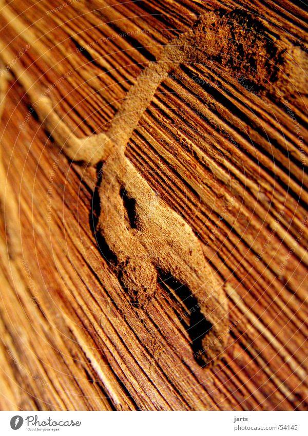 ...Wurm drin. alt Baum Holz