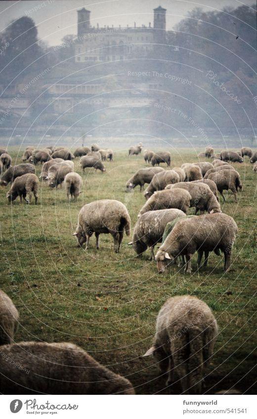 das ist sooooo Great Britain Lammfleisch Ernährung Bioprodukte Vegetarische Ernährung Ferien & Urlaub & Reisen Insel wandern Architektur Kultur Landschaft