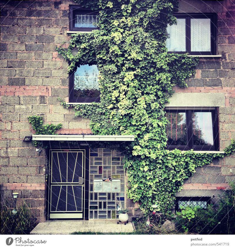 Häusliche Ansichten IV Haus Gardine Architektur Siebziger Jahre Efeu Fassade Fenster Tür Eingang Stein einfach braun grün Geborgenheit Mittelstand