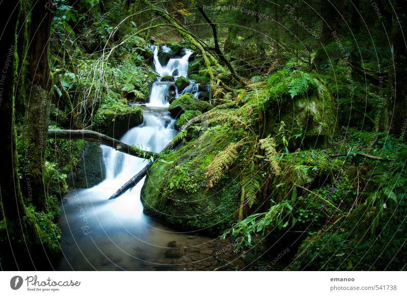 Schwarzwaldbach Natur Ferien & Urlaub & Reisen schön grün Wasser Pflanze Baum Landschaft Wald dunkel Berge u. Gebirge natürlich Felsen Sträucher nass Abenteuer