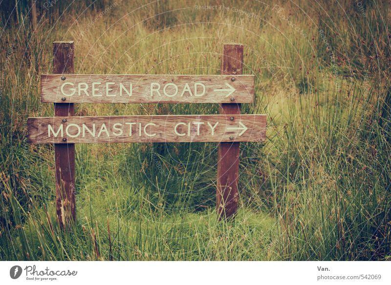 Green Road Natur grün Pflanze gelb Wiese Gras Holz Schilder & Markierungen Wegekreuz