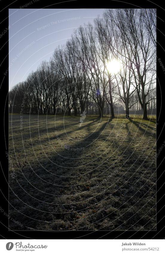 Rheinwiese Baum Sonne kalt Herbst Wärme frisch Physik rein grell Blende