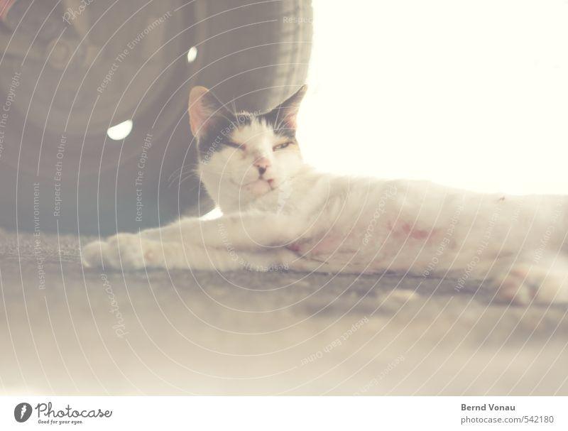 Ich bleib hier! Straße PKW Katze 1 Tier braun grau weiß faulenzen Fell liegen Müdigkeit Rad unten Trägheit Blick Zwinkern Reifen Felge Pfote Bauch Farbfoto