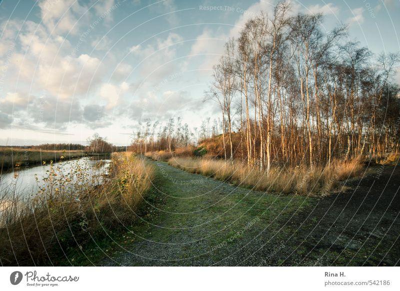 Himmlisches Moor Umwelt Natur Landschaft Pflanze Wolken Herbst Schönes Wetter Wind Baum Gras Birke Sumpf See Wege & Pfade ruhig Ferne Himmelmoor Farbfoto