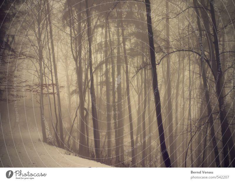 brüNetter Waldweg Umwelt Natur Landschaft Pflanze Winter Wetter schlechtes Wetter Nebel Schnee Baum Wege & Pfade Spuren natürlich braun schwarz trüb dunkel