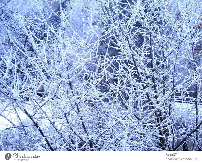 Minusgrad1 blau Winter kalt Eis hell frisch Frost
