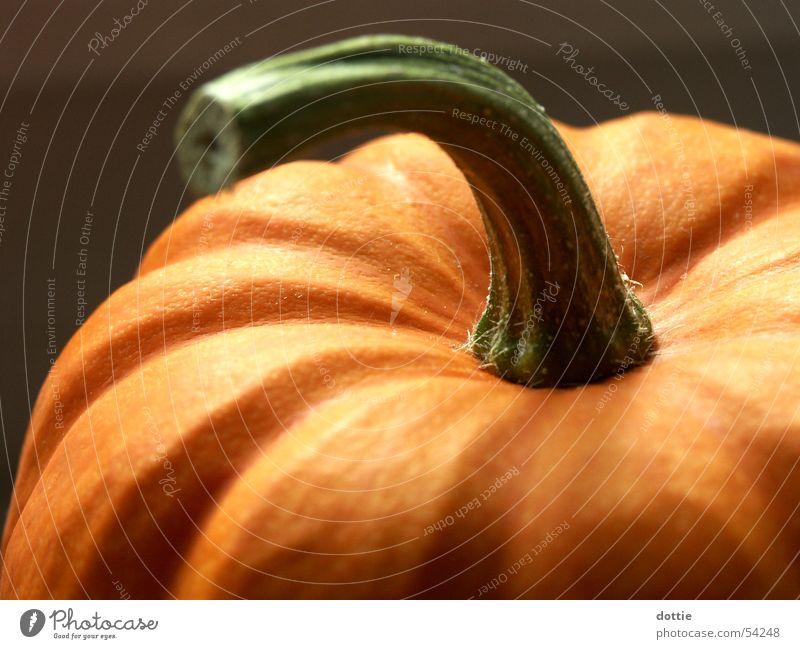 Halloween-Kürbis Herbst orange Gemüse Feiertag Erntedankfest