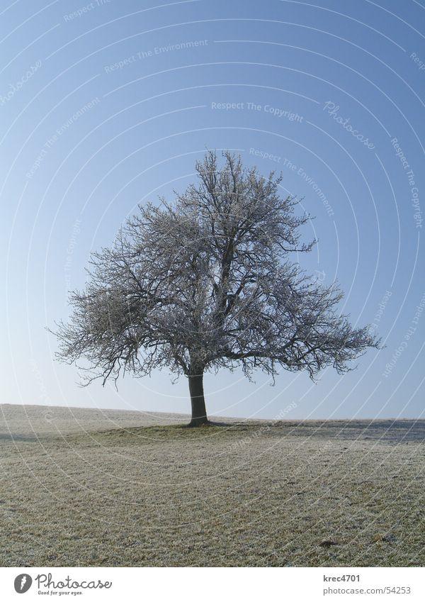 Einzelner Baum Wiese Winter einzeln Weide Himmel Blauer Himmel Raureif Einsamkeit alleinstehend