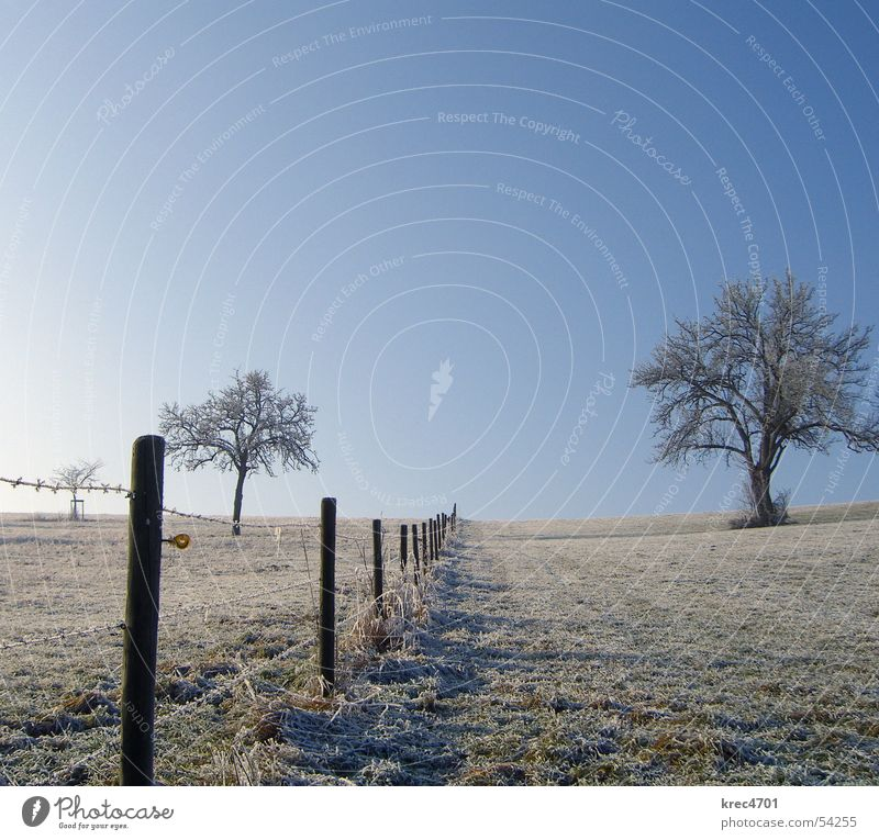 Getrennte Baum Wiese Winter einzeln Zaun Weidezaun Himmel Blauer Himmel Raureif Einsamkeit alleinstehend
