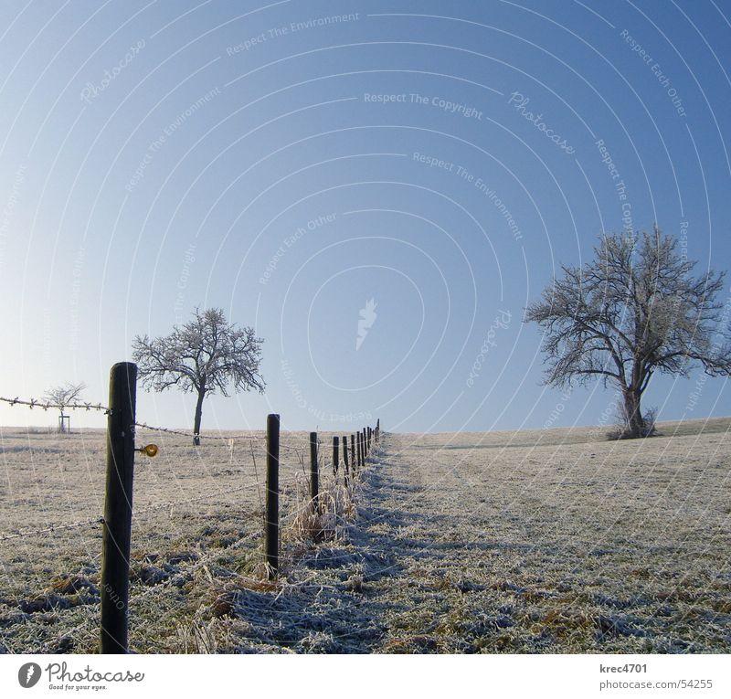 Getrennte Himmel Baum Winter Einsamkeit Wiese Weide Zaun einzeln Blauer Himmel Raureif Weidezaun
