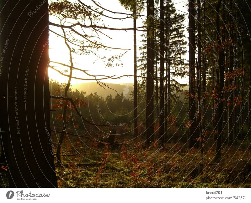 Wald im Gegenlicht II Baum Nadelwald Eifel grün Winter Sonne im grünen