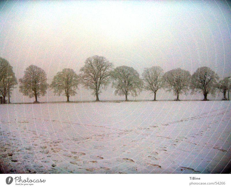 Bäume bei minus 14 Grad Baum Winter Schnee Landschaft Fußspur Spuren